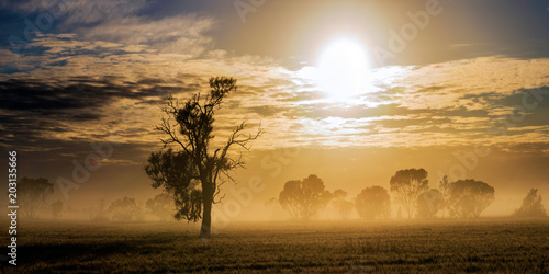 Fototapeta Morning fog with the sun shining through the clouds on a rural Australian property.