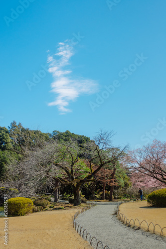Plexiglas Tokio Shinjuku Gyoen National Garden