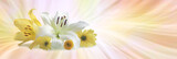 Special flowers for a Special Occasion - a white lily, a yellow lily and three daisies grouped together against a yellow orange and white laser line flowing background with copy space