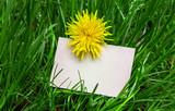 Leere Visitenkarte im hohen Gras mit Löwenzahn