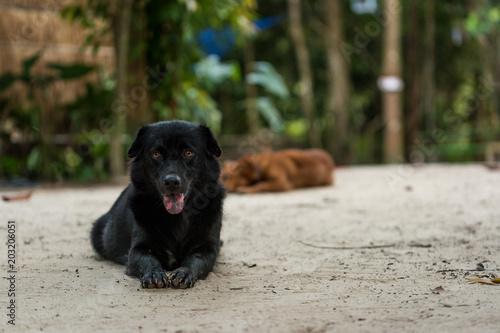 Sad black dog lies on the floor looking into camera
