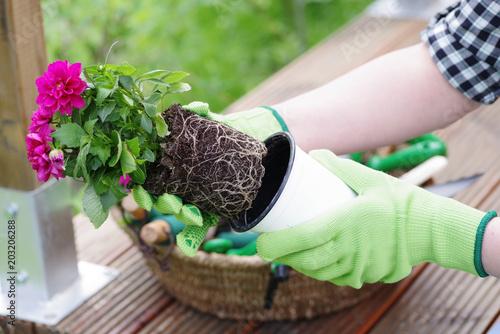 Fototapeta Bei der Gartenarbeit