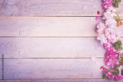 Leinwanddruck Bild Beautiful pastel colored cherry blossoms on rustic wooden background