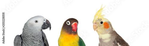 Aluminium Papegaai Three differents tropical birds