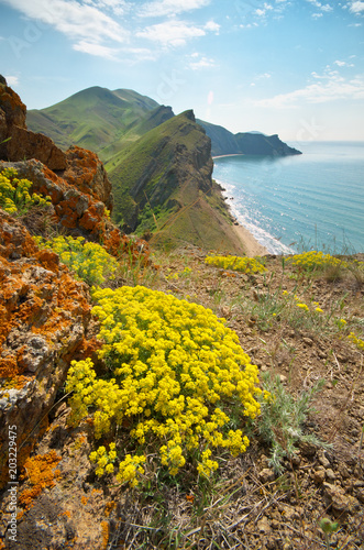 Sea and mountains spring bay. Yellow flowers on the slope.