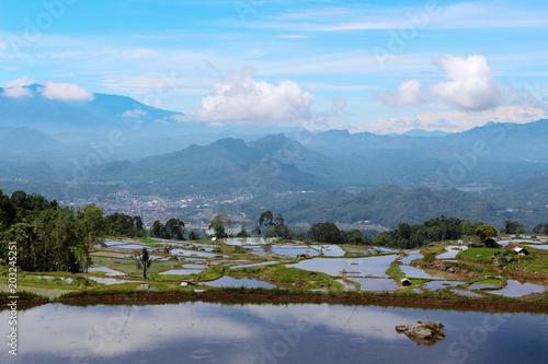 Plexiglas Rijstvelden Beautiful rice fields terassy. Indoneziya rainy season. Mountainous region of Sulawesi Island