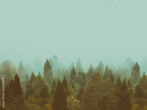 background of vintage forest in autumn with copyspace - 203266293