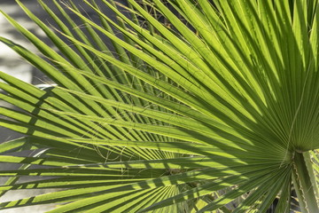 palm leaves in the afternoon