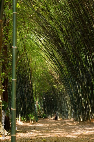 Plexiglas Bamboe Green bamboo forest path in the tropical island of Koh Phangan, Thailand. Nature landscape concept