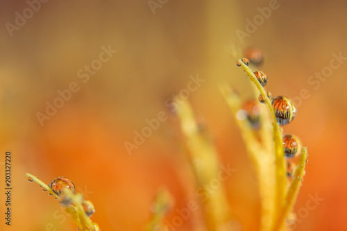 Bokeh background with water drops on orange flower petals