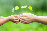 Adult and child holding little green plant in hands. Ecology concept - 203334629