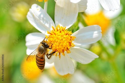 In de dag Bee Little bee hang on the white flower
