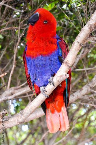 Fotobehang Papegaai Colored Tropical Parrot