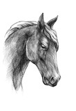 Sketch a horse head, black and white drawing - 203353856