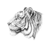 Sketch, graphics head of a tiger on the side - 203354035