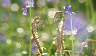 młode paprocie a w tle niebieskie kwiaty