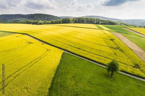 Fototapeta Hügellandschaft mit Rapsfelder - Luftaufnahme Burgenland (A)