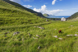 Beautiful scandinavian landscape with meadows, mountains and fjords. Lofoten islands, Norway. - 203376683