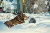 Dog with cat lying outdoors in the snow in winter. Cat and dog are friends - 203422260