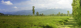 Tea fields in the foothills. Panoramic view