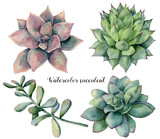 Watercolor set with succulent and branch. Hand painted colorful flowers with leaves and branch isolated on white background. Natural floral illustration for design, print, fabric or background. - 203441081