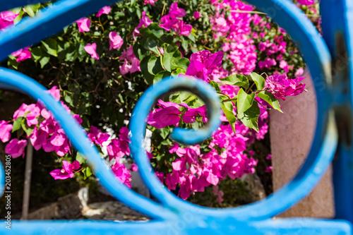 Plexiglas Santorini Santorin, blaues Gartentor
