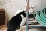 Cute White CAt  - 203476474