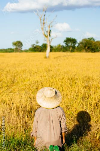 Fotobehang Oranje Brown Skin Farmer And His Rice Field
