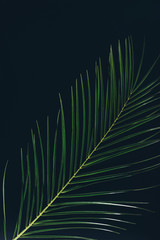 top view of green palm leaves isolated on black