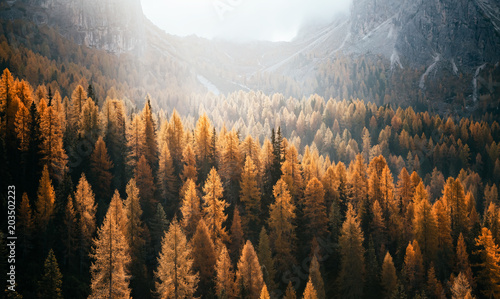 Great view of the yellow larches. National Park Tre Cime di Lavaredo, Dolomiti alp, Tyrol, Italy. - 203502223