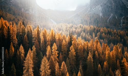 Great view of the yellow larches. National Park Tre Cime di Lavaredo, Dolomiti alp, Tyrol, Italy. - 203502223