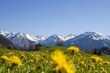 Allgäu - Alpen - Frühling - Oberstdorf - Berge - Löwenzahn
