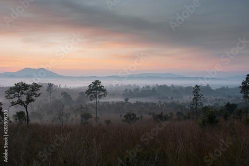 Aluminium Zonsopgang Sunrise landscape tropical forest view.