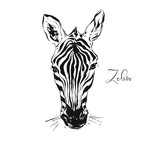 Hand drawn vector abstract artistic ink textured graphic sketch drawing illustration of wildlife zebra head isolated on white background - 203513007