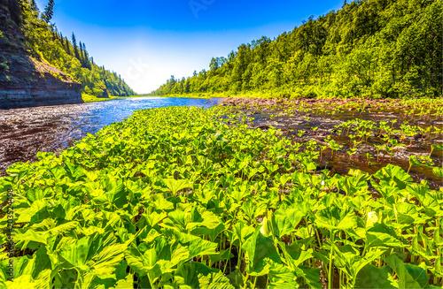 Plexiglas Geel Mountain forest river grass landscape