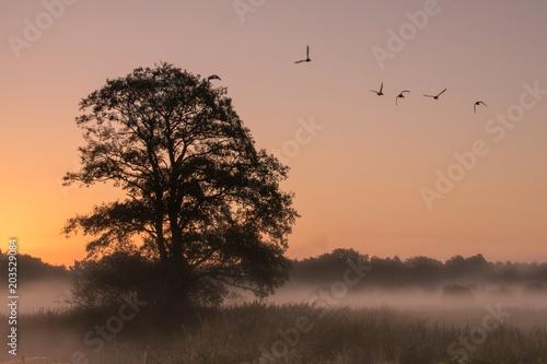 Plexiglas Zalm Baum im Nebel im Morgenrot