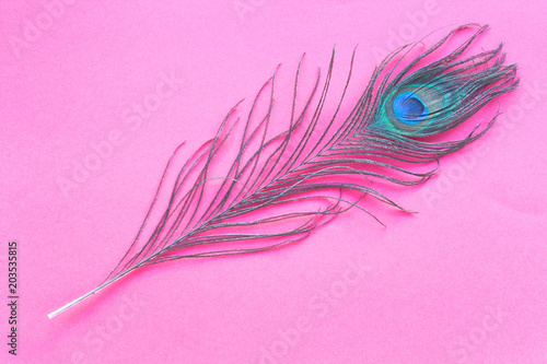 Plexiglas Pauw Peacock feather isolated on red background