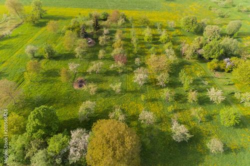 Plexiglas Honing Luftaufnahme blühenede Steuobstwiesen im Frühling