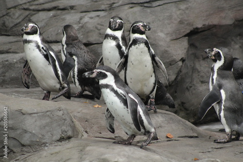 Aluminium Pinguin Penguins Gathering Herd