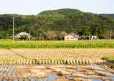 Japanese countryside with rice fields in autumn - 203625089
