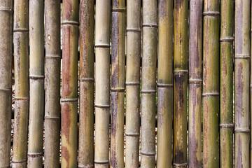 Bamboogrove,bambooforestatDamyangCounty,SouthKorea.