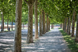 Tree lined avenue, Lucca