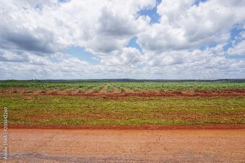 Foto Murales Landwirtschaft, Feld auf Kuba, Karibik