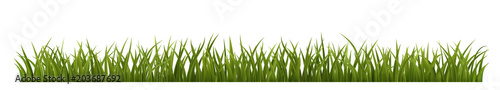 Fresh Green Grass - 203687692