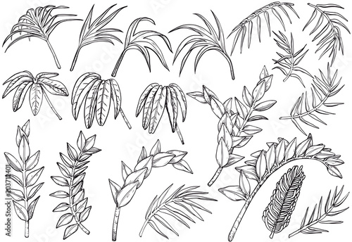 Fototapeta Hand drawn Tropical palm jungle plants set