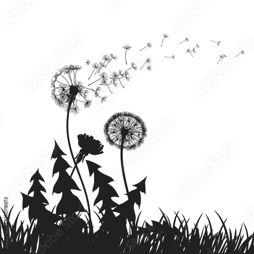 Fototapeta Abstract Dandelions dandelion with flying seeds – for stock vector