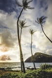 sunrise on a beach in hawaii with palm trees - 203721200