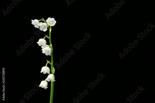 Plexiglas Lelietjes van dalen Lily of the valley, is a beautiful flower in the garden.