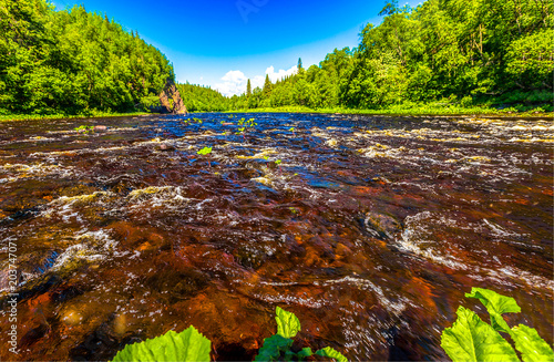 Fotobehang Zomer Summer forest river water flow landscape