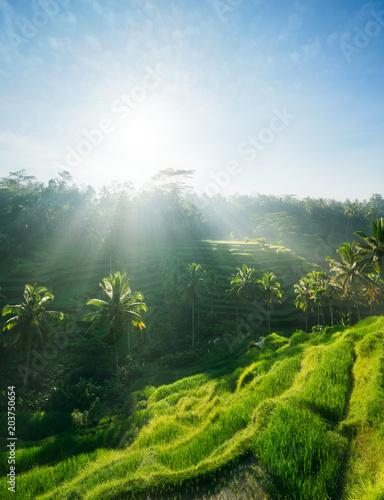 Plexiglas Bali Rice terraces of Bali, Indonesia